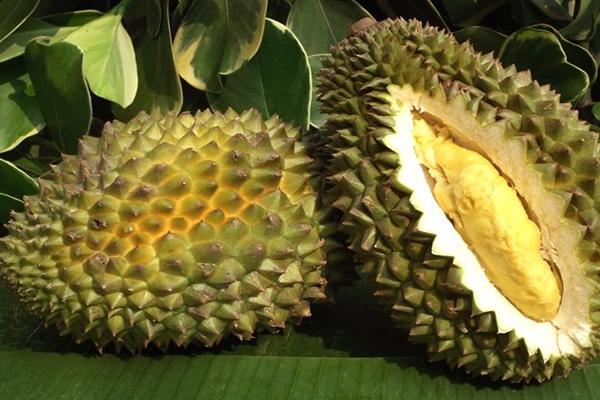Jual Durian Sitokong Harga Murah